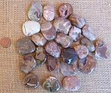 Mt. Hay Thundereggs / Amulet Stone / Star Agate Shapes and Tumbles